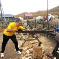 Mongolija žaganje drv za kurjavo v geru