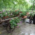 Piknik OO Koper v Rižani (4)