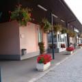 Rože v Ivančni Gorici (4)